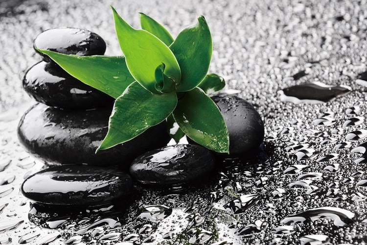 Zen - Green nature Print på glas