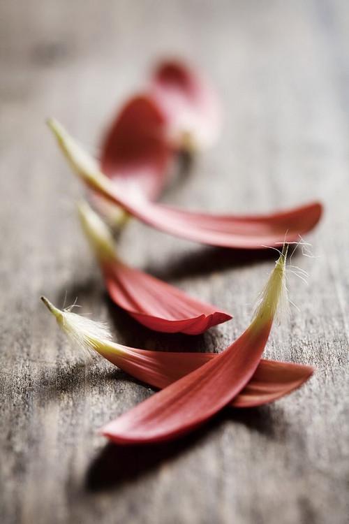 Zen - Red Leaves Print på glas
