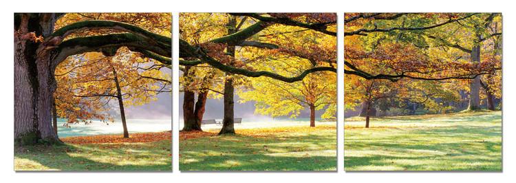 Quadro Autumn Trees in the Park