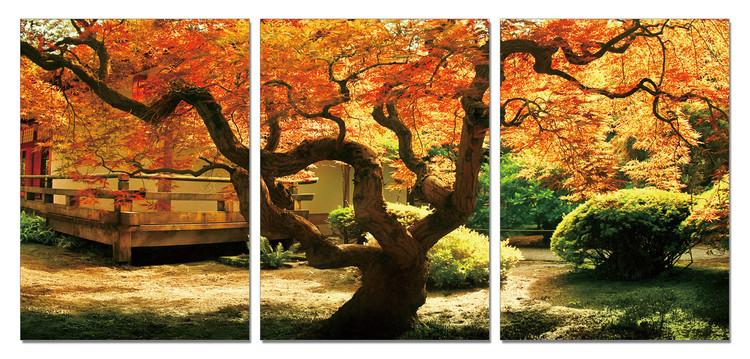 Quadro Maple Tree in Autumn