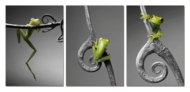 Quadro New Model - Frog