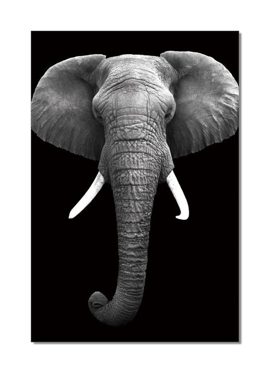 African Elephant (Zwart Wit) Schilderij