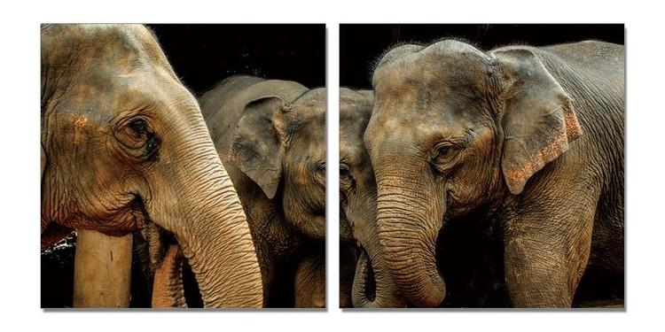 Elephant's love Schilderij