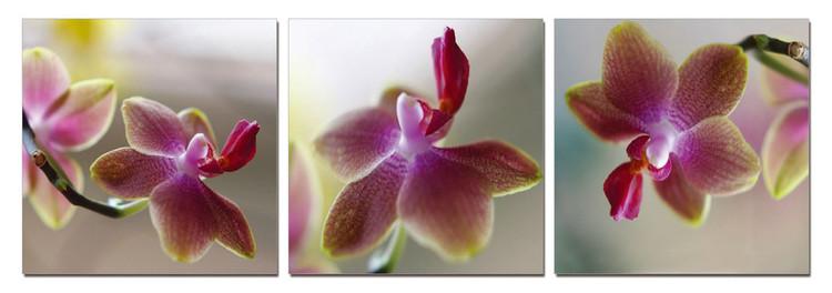 Orchid - Blossoms Schilderij