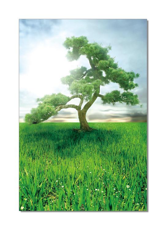 Pine Dream Schilderij