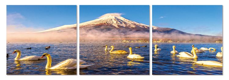 Swans on the lake Schilderij