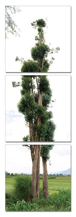 Tree - Endless Love Schilderij