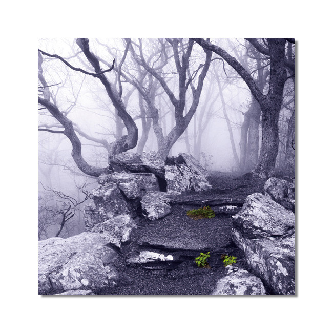World is not Black and White - Appalachian Trail, Virginia Schilderij