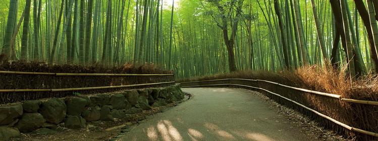 Skleněný Obraz Bambusový les - Pěšina