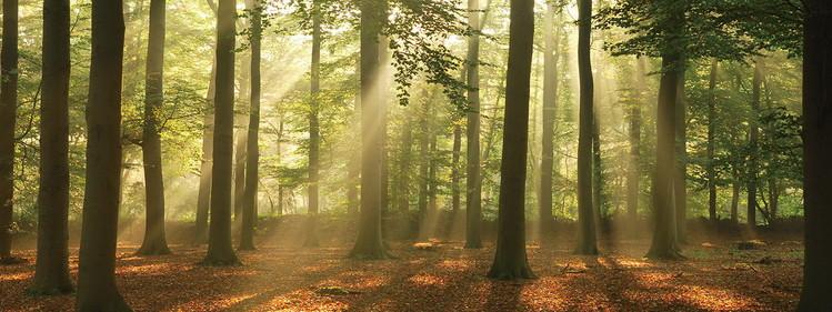 Skleněný Obraz Les - Slunný les
