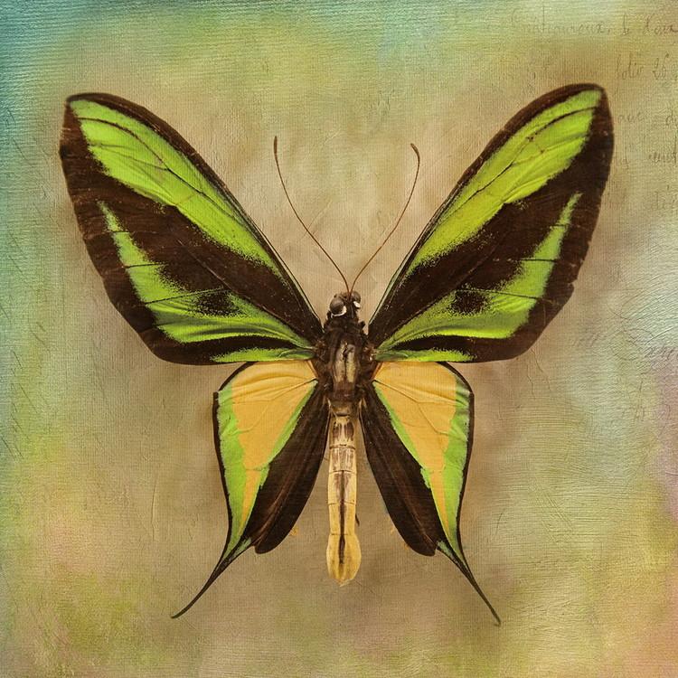 Skleněný Obraz Motýl - Zelený