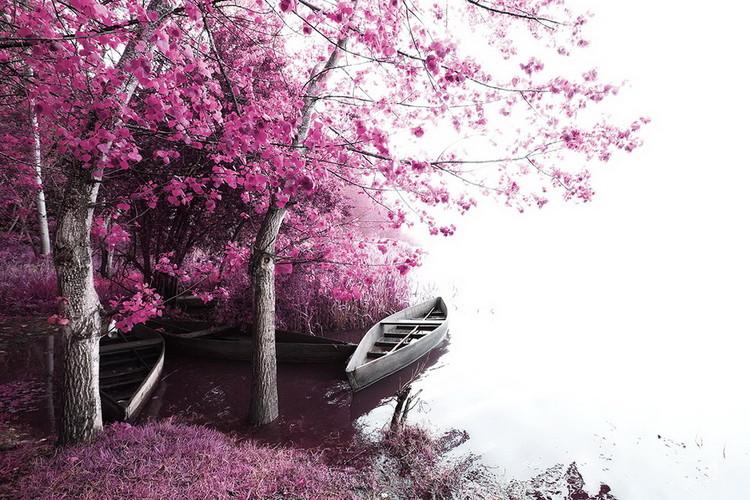 Skleněný Obraz Pink World - Rozkvetlý strom s lodí 2
