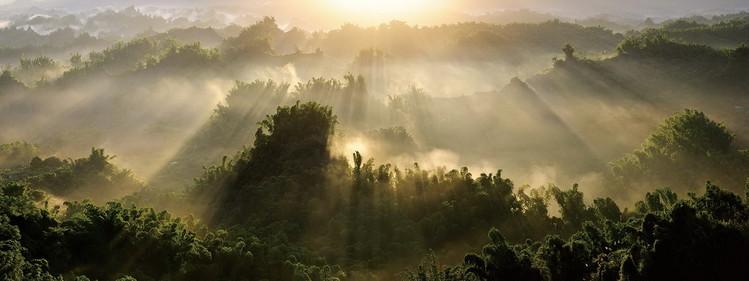 Skleněný Obraz  Pohled na les se slunečnými paprsky