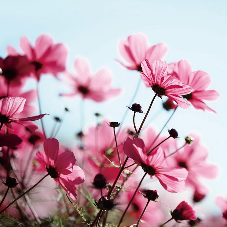 Skleněný Obraz Růžové květiny na louce