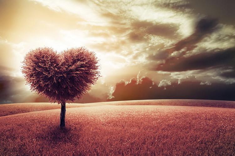 Skleněný Obraz Strom - Srdce