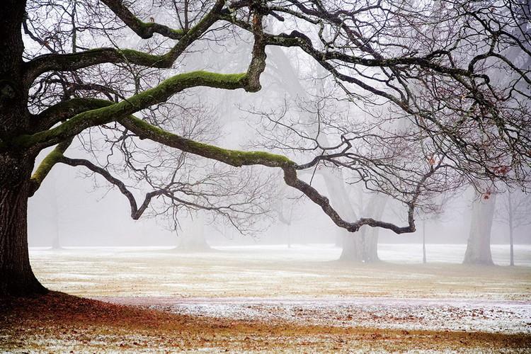 Skleněný Obraz Strom v mlze