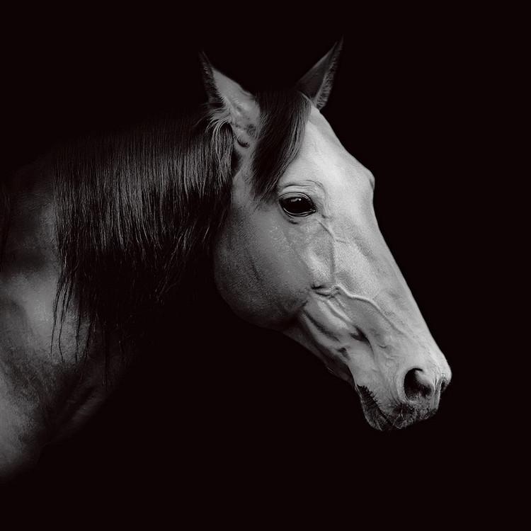 Horse - Head b&w Staklena slika