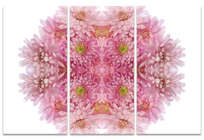 Stampa su Tela Alyson Fennell - Pink Chrysanthemum Explosion