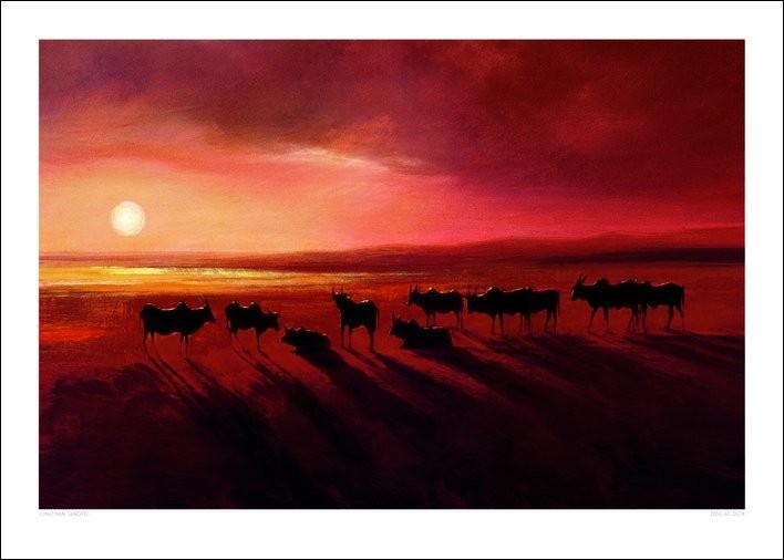 Stampe d'arte Jonathan Sanders - Zebu At Dusk
