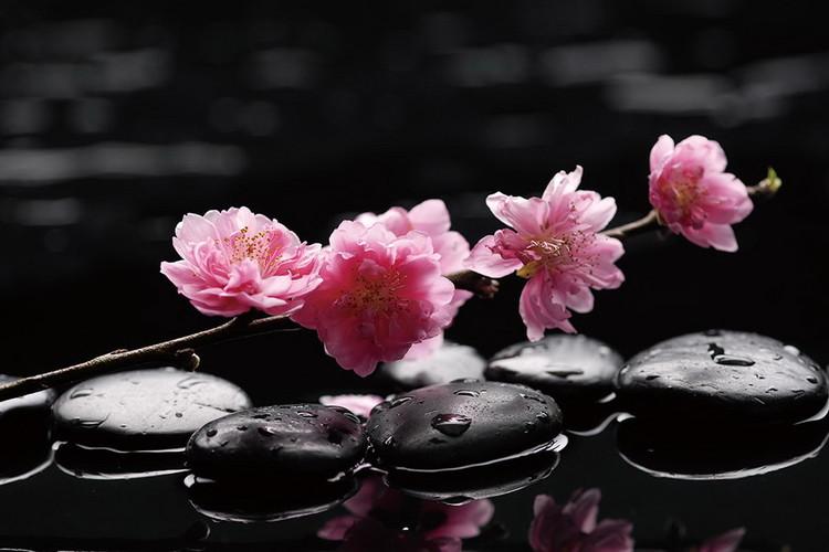 Szklany obraz Zen - Pink Orchid 2