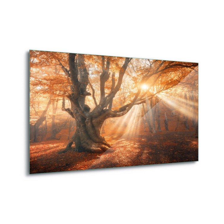 Tableau sur verre  Autumn Magic