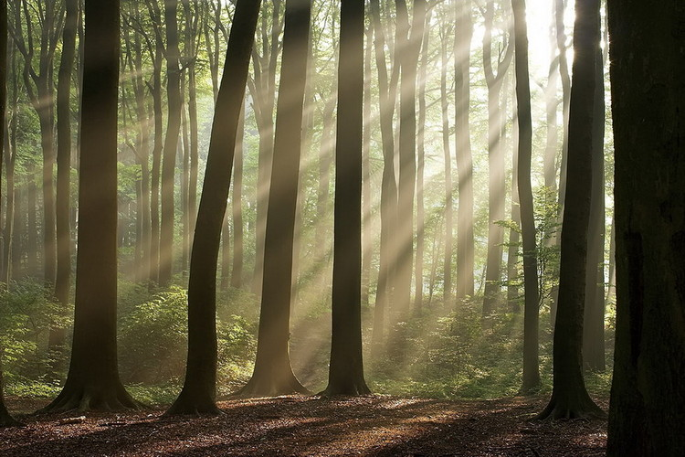 Tableau sur verre Forest - Sunbeams