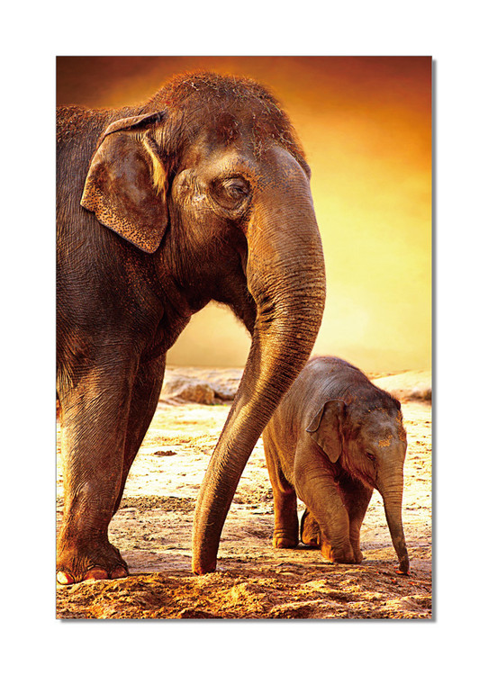 Elephants - Mom and Baby Tableau Multi-Toiles