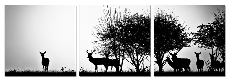 Forest Life - Silhouettes Tableau Multi-Toiles