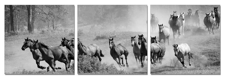Horses - Running Herd of Horse Tableau Multi-Toiles