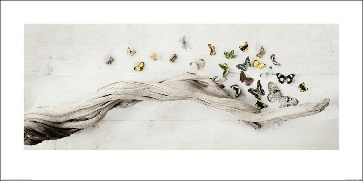 Ian Winstanley - Drift of Butterflies Reproduction de Tableau