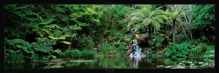Jardin d'Ayrlies - Auckland - New Zeland Reproduction d'art