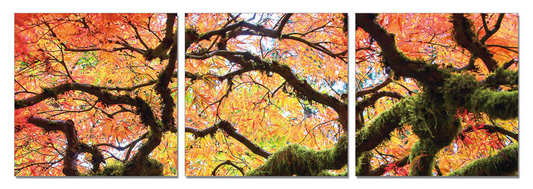View of autumn tree's crown Tableau Multi-Toiles
