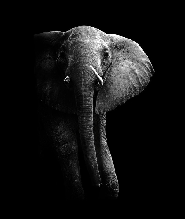 Elephant! Tablou Canvas