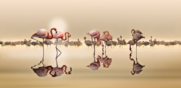 Flamingos Ii Tablou Canvas