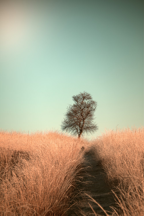 Grass and Path Tablou Canvas