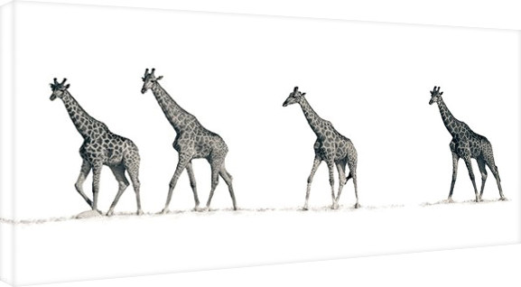 Mario Moreno - The Giraffes Tablou Canvas