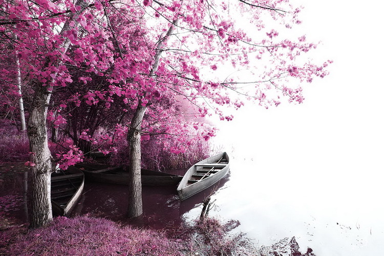 Tablouri pe sticla Pink World - Blossom Tree with Boat 2