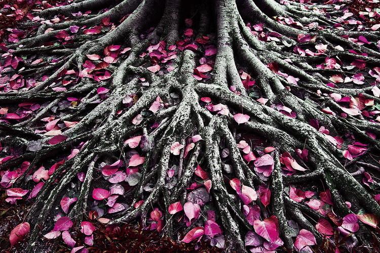 Tablouri pe sticla Pink World - Pink Roots