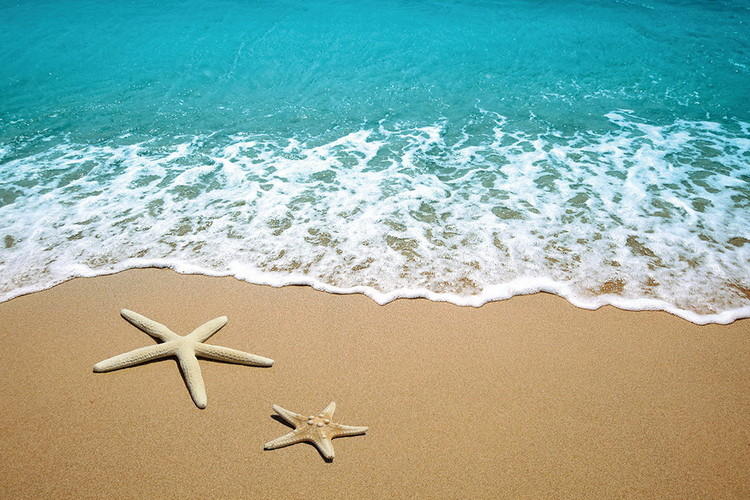 Tablouri pe sticla Sea - Stars in the Sand