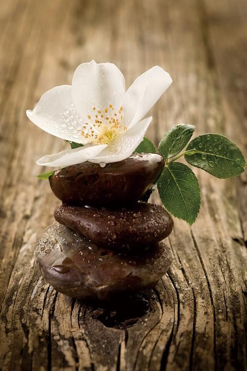 Tablouri pe sticla Zen - Blossom