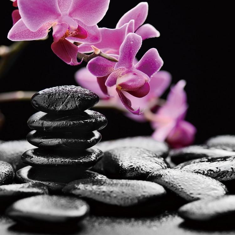 Tablouri pe sticla Zen - Pink Orchid