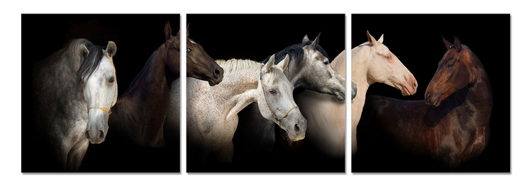 Horses Tablou