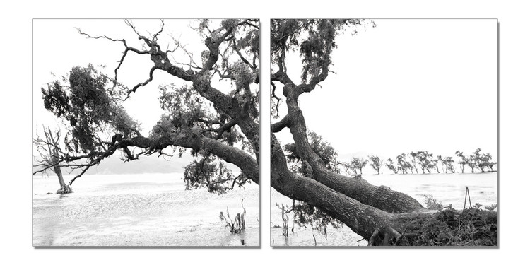 Praying Tree (B&W) Tablou