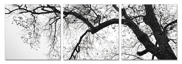 Treetop (B&W) Tablou