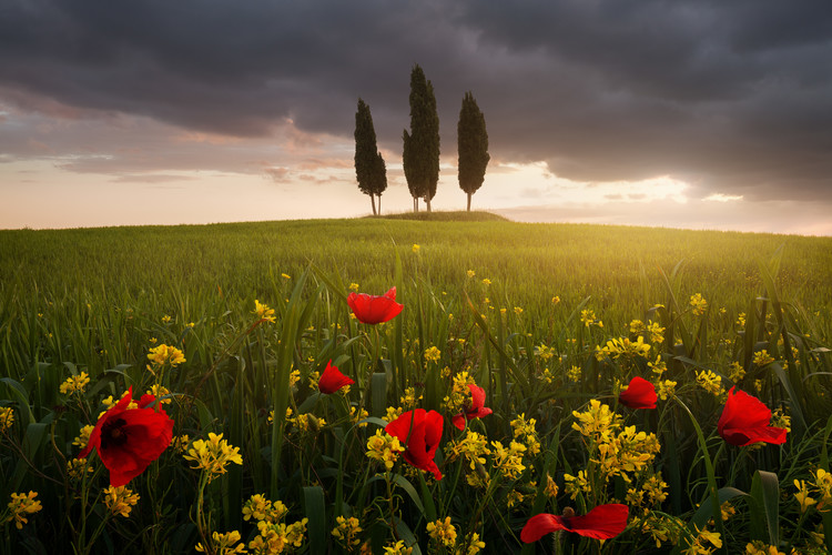Tableau sur Toile Blooming Tuscany