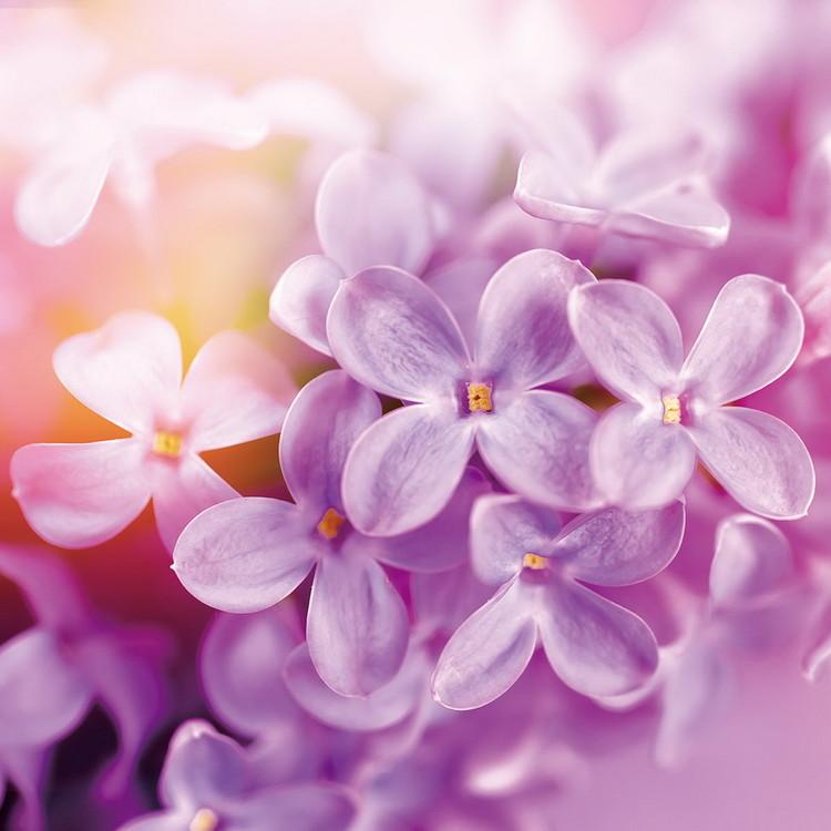 Üvegkép Puprle Blossoms