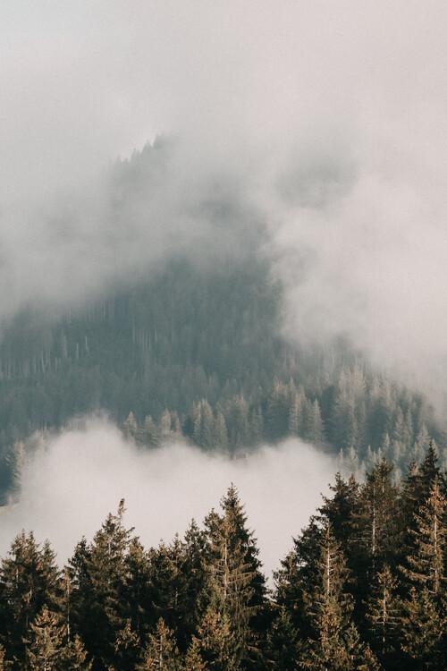 Umjetnička fotografija Black Forest