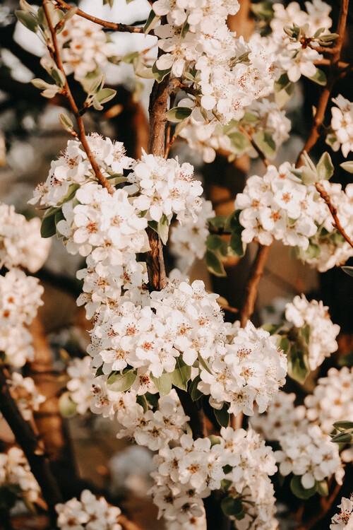Umjetnička fotografija Flower madness
