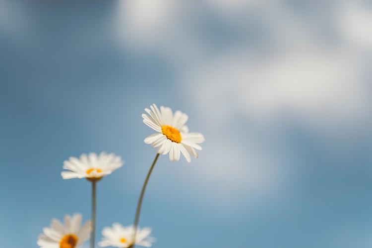 Umjetnička fotografija Flowers with a background sky