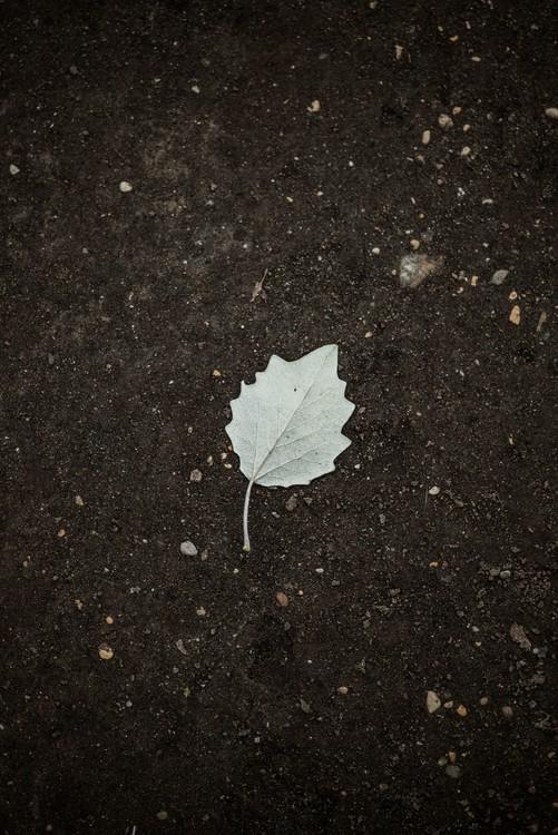Umjetnička fotografija One white leaf on the black terrain